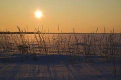 Zimy słońce Fotografia Royalty Free
