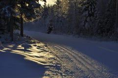 Zimy słońce Fotografia Stock