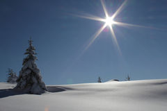 Zimy słońce Zdjęcia Stock