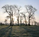 Zimy słońce i drzewa zdjęcie stock