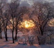 Zimy słońce w gałąź drzewa, śnieżystych Zdjęcia Stock