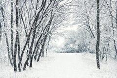 Zimy scena Obraz Stock