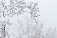 Zimy scena Zdjęcie Royalty Free