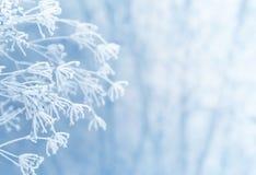 Zimy scena Zdjęcia Stock
