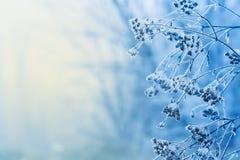 Zimy scena Obraz Royalty Free