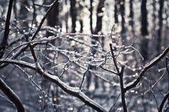 Zimy scena Fotografia Stock