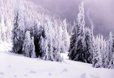 Zimy scena 2 fotografia royalty free