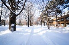 Zimy scena Sapporo, hokkaido, Japonia obraz royalty free
