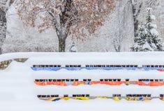 Zimy scena w parku Kolorowy amfiteatr zakrywający z śniegiem obraz stock