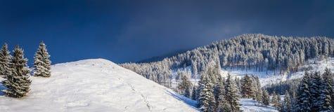Zimy scena z śniegi zakrywającymi jedlinowymi drzewami Zdjęcia Stock