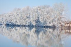 Zimy scena z białymi drzewami Obraz Royalty Free