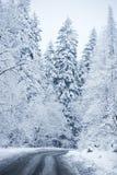 Zimy sceneria - Lasowa droga Fotografia Stock