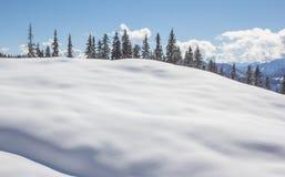 Zimy sceneria Z drzewa niebieskim niebem I śniegiem Fotografia Royalty Free