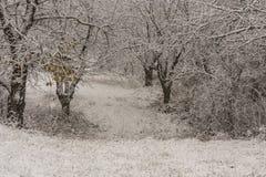 Zimy sceneria z drzewami Obraz Stock