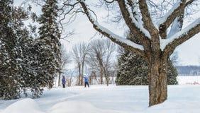 Zimy sceny Jacques natury park Zdjęcia Royalty Free