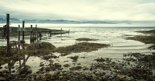 Zimy seashore krajobraz Obraz Stock