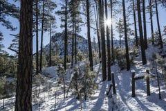 Zimy Sunburst Zdjęcie Stock