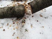 Zimy tło drewno cutted w dwa części - pojęcia łupka zaopatrzenie dla grzejnego sezonu - obrazy royalty free