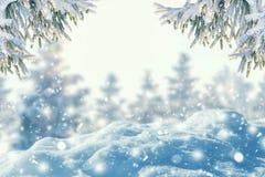 Zimy tło mrozowa jodły gałąź, opad śniegu i zdjęcia stock
