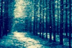 Zimy tło, sosny gałąź Obraz Royalty Free