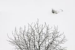 Zimy tło z gałąź Obrazy Stock