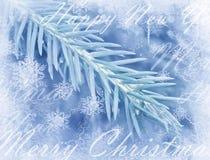 Zimy tło z odosobnioną sosny gałąź Frosted jedlina Sosen gałąź zakrywać z hoarfrostChristmas wiecznozielonym świerkowym drzewem Zdjęcie Stock