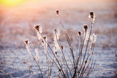 Zimy trawa zdjęcia royalty free