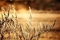 Zimy trawa obraz stock
