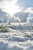 Zimy trawa wewnątrz kształtuje teren śnieżnego pola śniegu naturę Fotografia Royalty Free