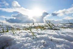 Zimy trawa wewnątrz kształtuje teren śnieżnego pola śniegu naturę Obraz Stock