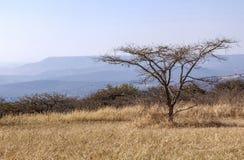 Zimy trawy linia horyzontu na Górkowatym Wiejskim krajobrazie i drzewo Fotografia Stock