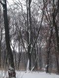 Zimy uczucie zdjęcie royalty free