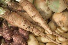 Zimy warzywo Fotografia Stock