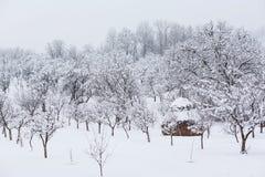 Zimy wsi ogród Fotografia Royalty Free