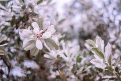 Zimy zieleń opuszcza drzewa skupia się na swój gałąź obraz stock