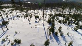Zimy ziemi wzrosta antena 4k zdjęcie wideo
