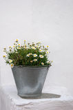 Zinc bucket of daisies on white walls Stock Images