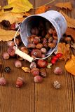 Zinc bucket with distributed acorn, chestnut and rosehip Royalty Free Stock Photography