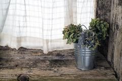 Zinc bucket with dried flowers Royalty Free Stock Images