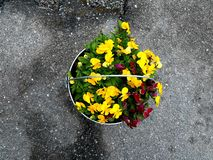 A zinc bucket can also be used as a flower pot stock photo