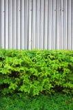 Zinc fence. Fence,texture,protect,plent,wall Stock Photo