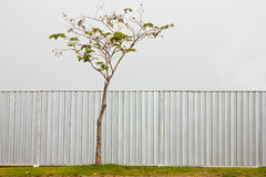Zinc Fence and tree Royalty Free Stock Photography