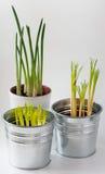 Zinc flower pots Royalty Free Stock Image