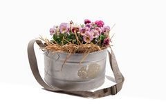 Zinc galvanized basket with pansies and straw Royalty Free Stock Photography
