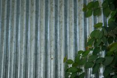 Zinc and Vine Walls. stock photography