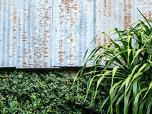 Zinc wall and green leaves Stock Image