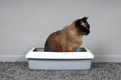 Zindelijke kattenzitting in katten` s toilet of kattebak stock foto's