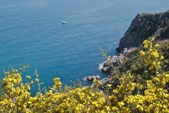 Zingaro Natural Reserve with mimosas Stock Photography