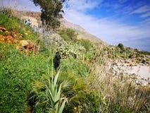 Zingaro van Riservadello bos en marien beschermd gebied Royalty-vrije Stock Fotografie