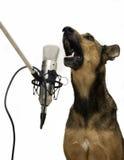 Zingende Hond royalty-vrije stock foto's